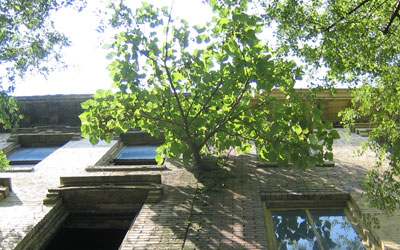 wall_tree.jpg