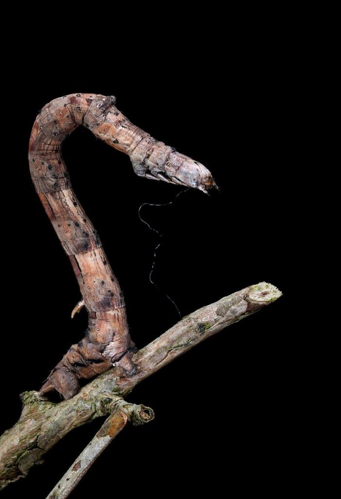 samuel-jaffe-caterpillar